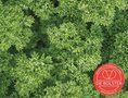 Peterselie-(krulpeterselie)-zaden-EKO