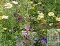 Bloemenmengels-Hoog-demeter-(bio-dynamisch)