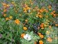 Bloemenmengels-Middel-demeter-(bio-dynamisch)