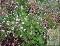 Bloemenmengels-Laag-demeter-(bio-dynamisch)
